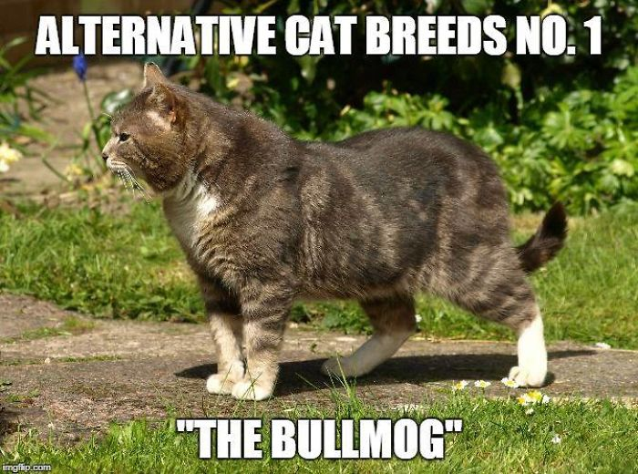 40 Alternative Cat Breeds
