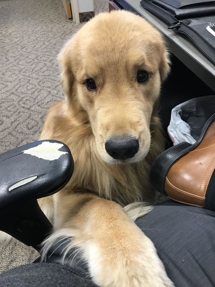 We Have An Office Dog And He Visited Me Today