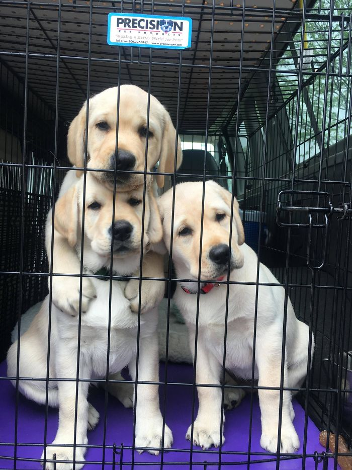 I Asked A Women If I Could See The Puppies In Her Trunk, Snapped This Quick Pic!