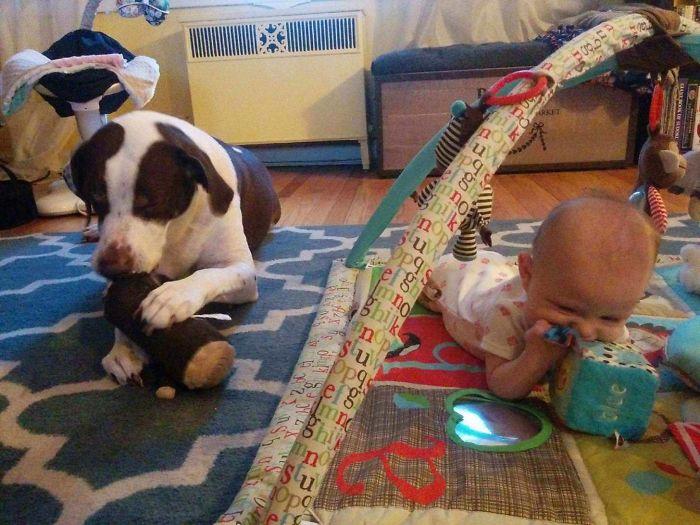 Por algo dicen que tener perro te prepara para tener hijos