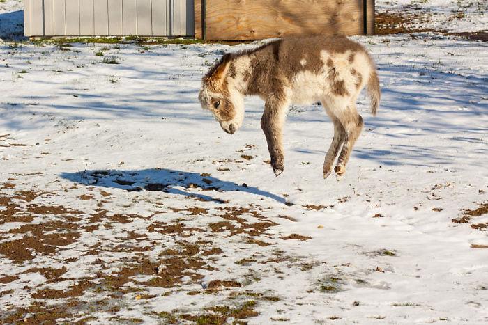 Levitating Donkey
