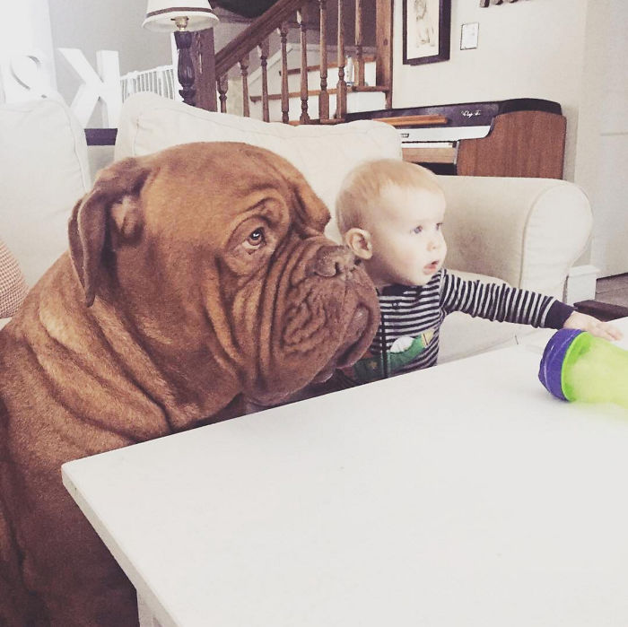 My 1-Year-Old Kid And 150 Lb Mastiff Are Best Friends