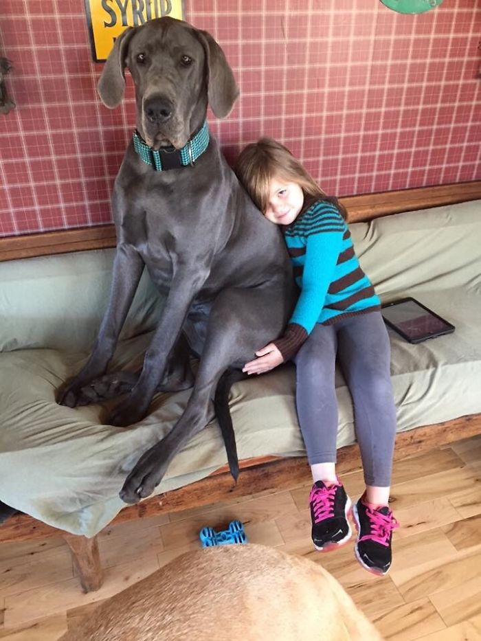 My 7-Year-Old Daughter And A 10 Month Old Great Dane Pup