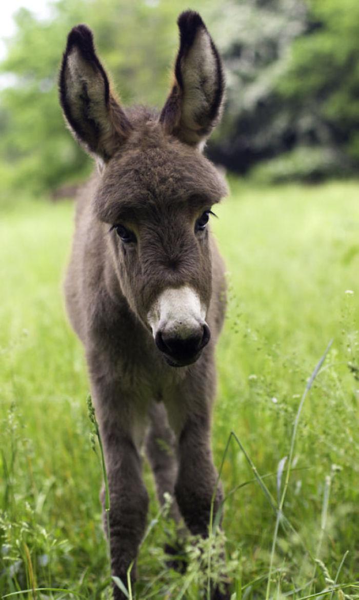 Long Ears And Sweet Eyes