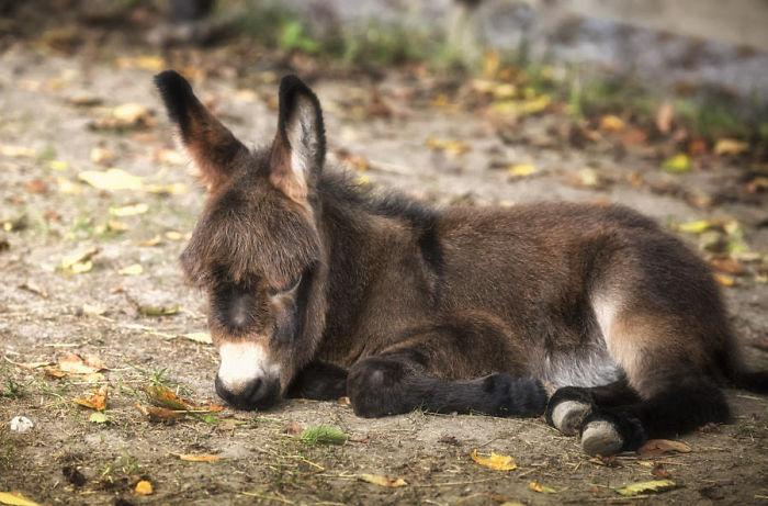 Lovely Baby Donkey