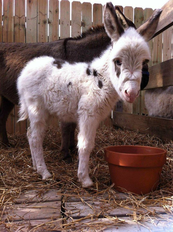 Baby Donkey I Found The Other Day At The Place Where We Get Our Christmas Trees