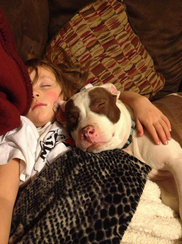 Ferocious Pit Bull Smothers Small Child