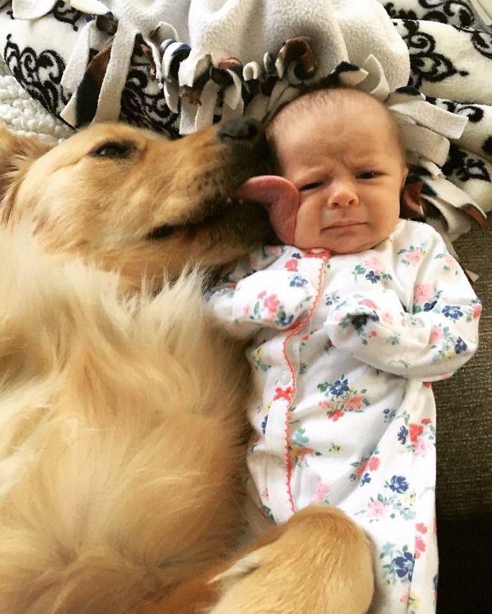 El perro adora a la niña, la niña aún no está segura