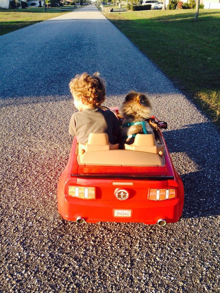 Mi hijo nunca conoció a su bisabuelo, pero ha heredado a su mejor amigo