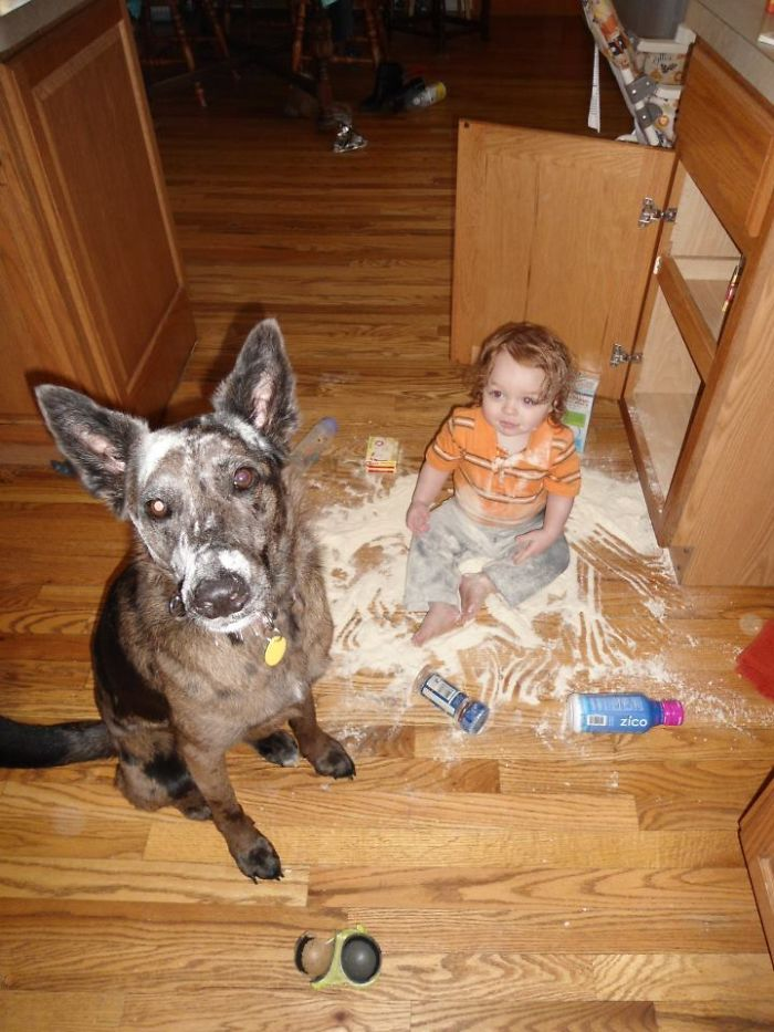 My Friend's Son And His Canine Accomplice Got Into The Kitchen Cabinet