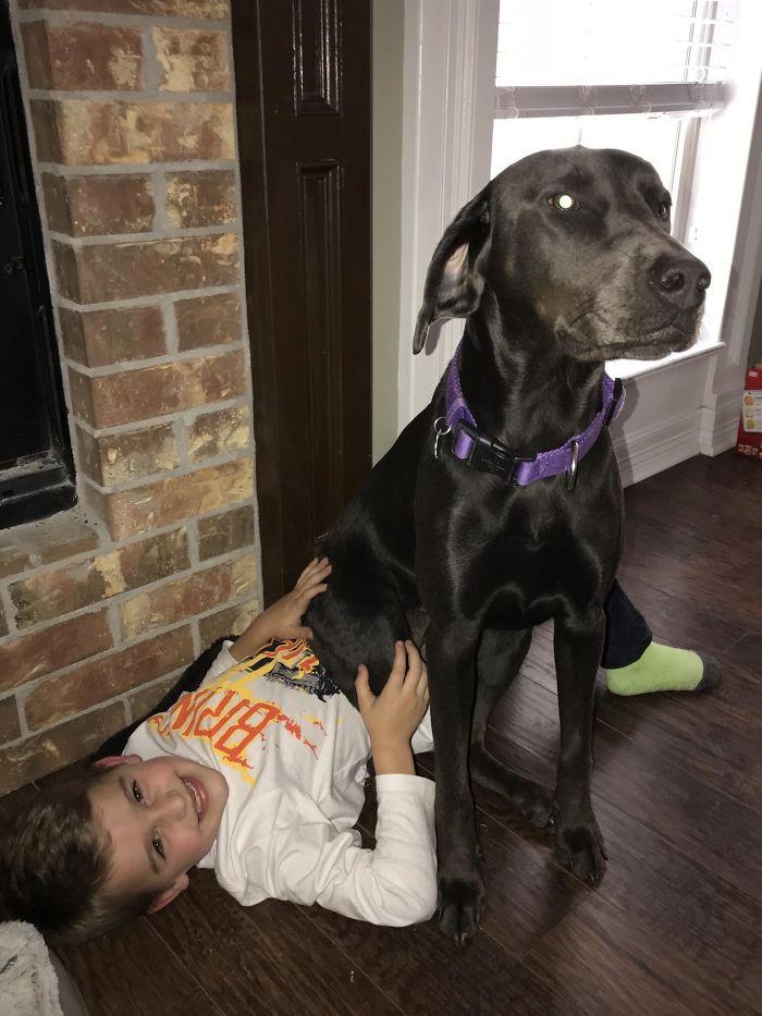 Al perro no le gusta que mi hijo se vaya al cole. Esta mañana se ha sentado encima suyo para que no se vaya