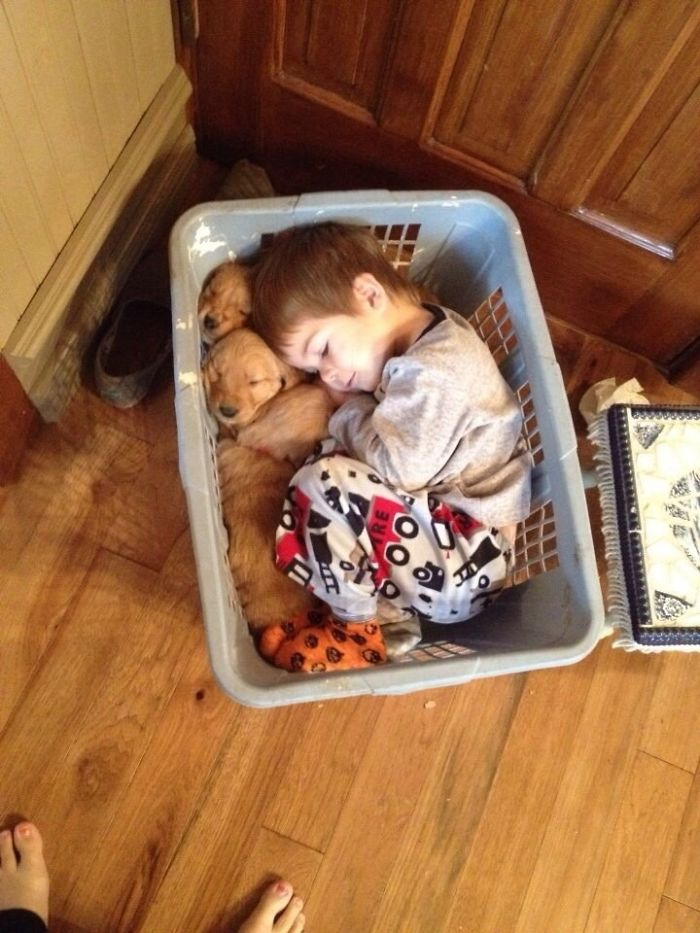 Se ha dormido con los cachorros en el cesto