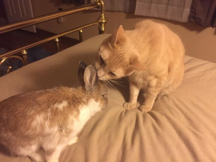 My Rabbit Is 10-Years-Old And Has Trouble Cleaning Himself Now. Colby Stepped Up To The Plate