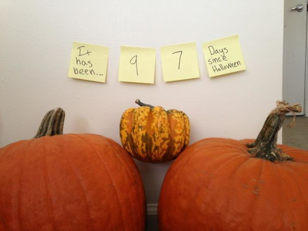 Roommate's Pumpkins. Delicately Drawing The Line Between Passive-Aggressive Post-It Notes And Reasonable Reminders