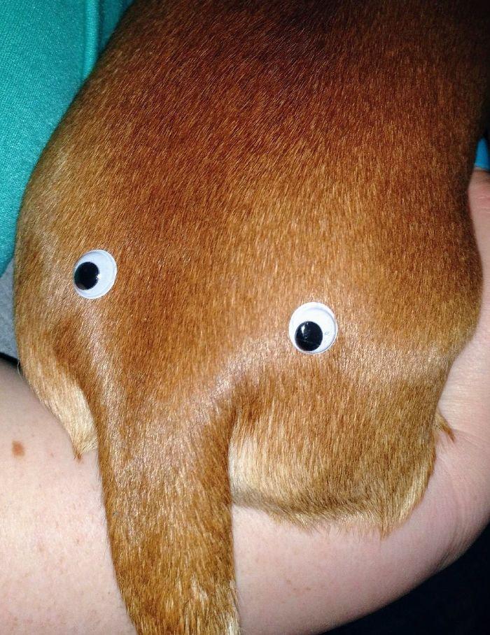 """Mi novio ha comprado 500 ojos saltones """"porque sí"""" y esto es lo 1º que ha hecho"""