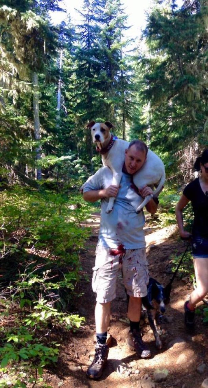 Kind Stranger! While Hiking This Dog Sliced An Artery In Her Foot. A Man Happened To Be Passing Right When This Happened And It Truly Was Fate Since The Girl Could Not Carry A 70lb Dog Up The Steep Trail. Dave, Wouldn't Accept Money Or A Gift Card, He Just Wanted A Picture