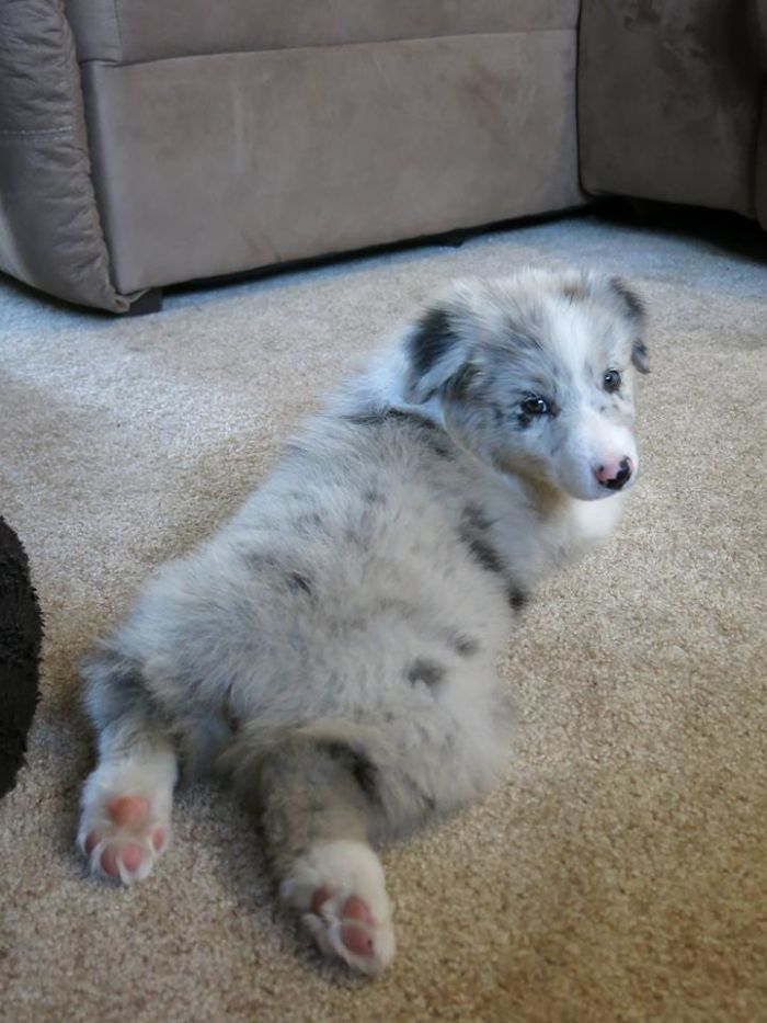 Proud To Be An Aunt For This Adorable Aussie Pupper. Meet Roo