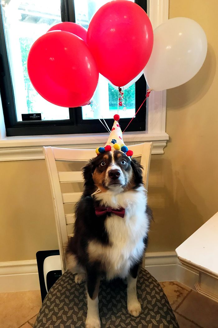 It Was My Pups Second Birthday The Other Day. He Wasn't Thrilled With All The Pictures