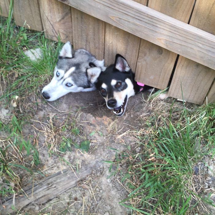 Tenemos nuevos vecinos y tienen perros
