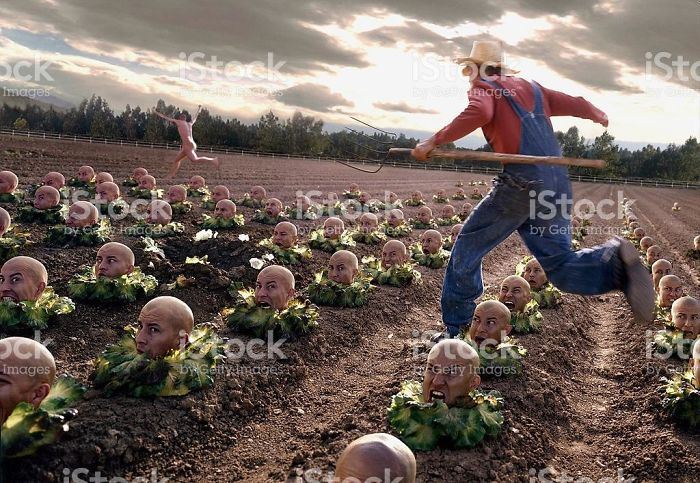 Chasing Streaker Through Head Cabbage Field