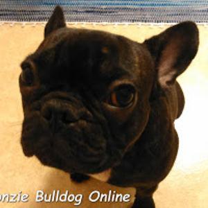 Fonzie Bulldog