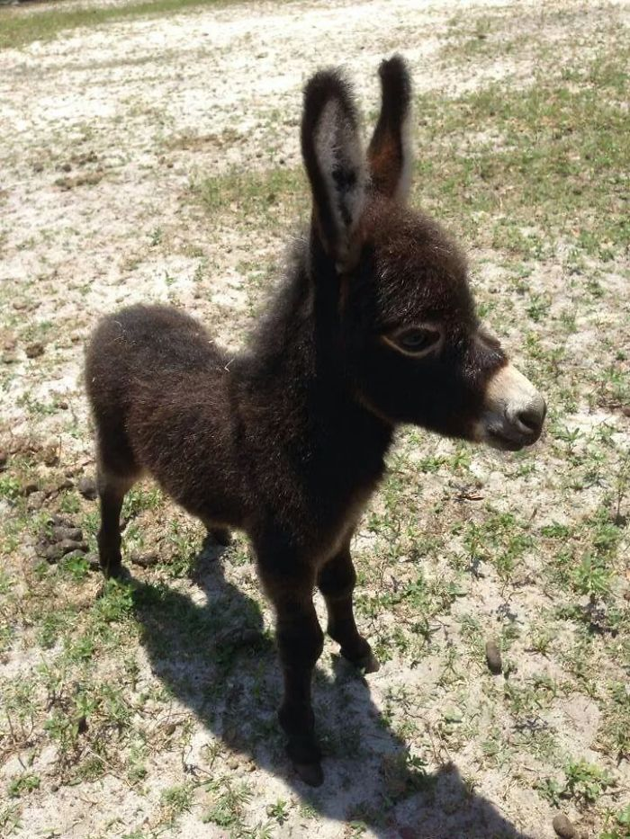 And Here Is A Baby Donkey