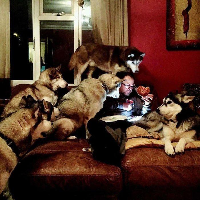 Noche de pizza con los perros