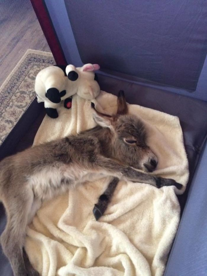 Sleeping Tiny Tim