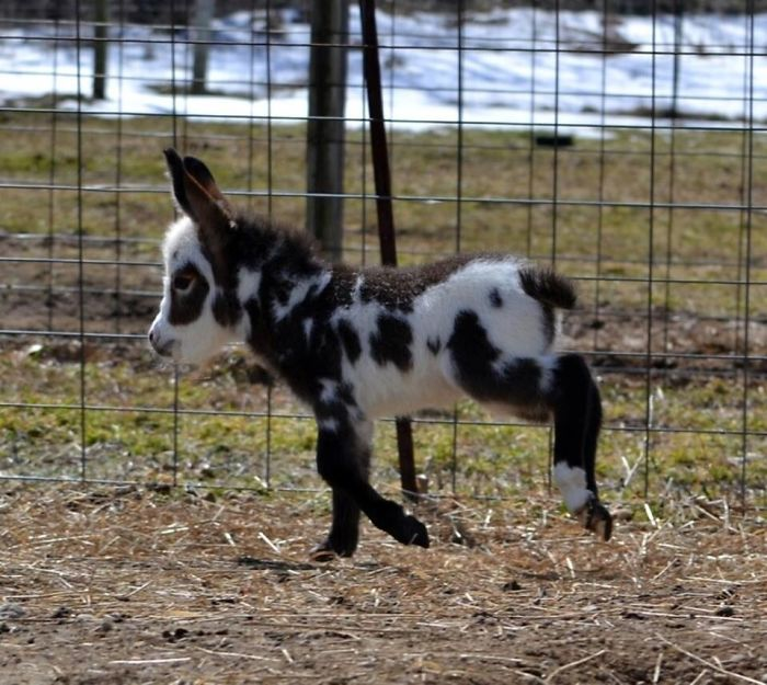 Baby Donkey With Dots