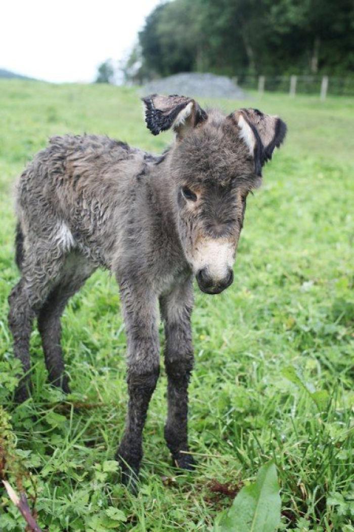 Newborn Donkey Foal