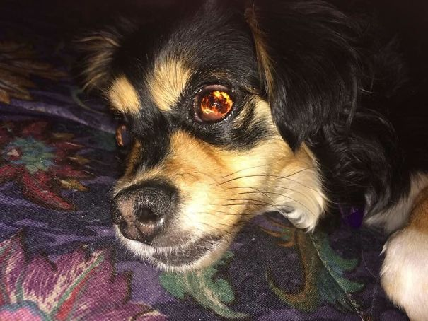 When I Take Pictures Of My Blind Dog W/ The Flash On It Looks Like There Is Fire In Her Eyes
