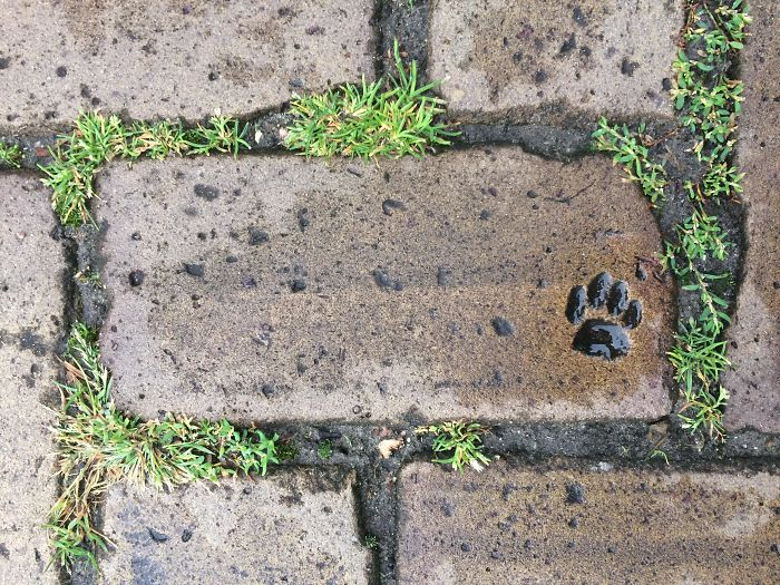 "Some Cat ""Helped"" With This Paving Stone Near My House"