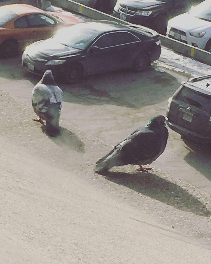 Hice una foto de 2 palomas en el alféizar y parecen 2 palomas enormes buscando su coche