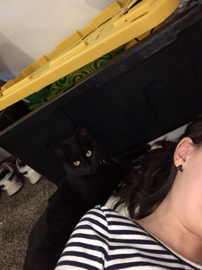 Was Reading In The Basement When Kitty Comes Along… Starts Licking My Hair. Was Mated For A Few Days