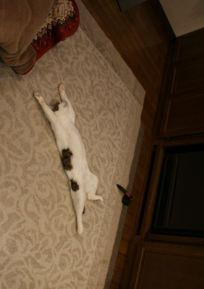Twitter Users Have Started A New Trend- Take Pictures Of Your Cats Stretched