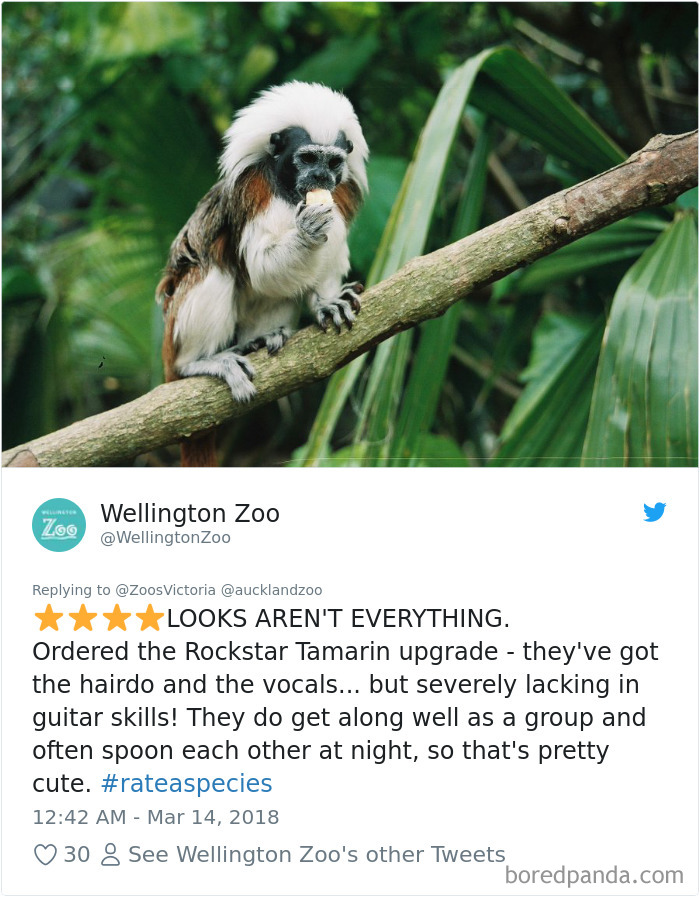 Zoos Post Animal Reviews On Twitter And They Are Hilarious