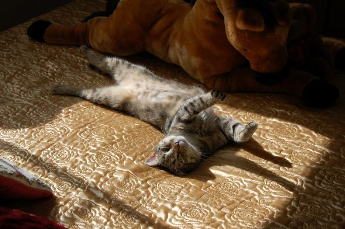 Nothing Better Than Stretching In A Sunbeam