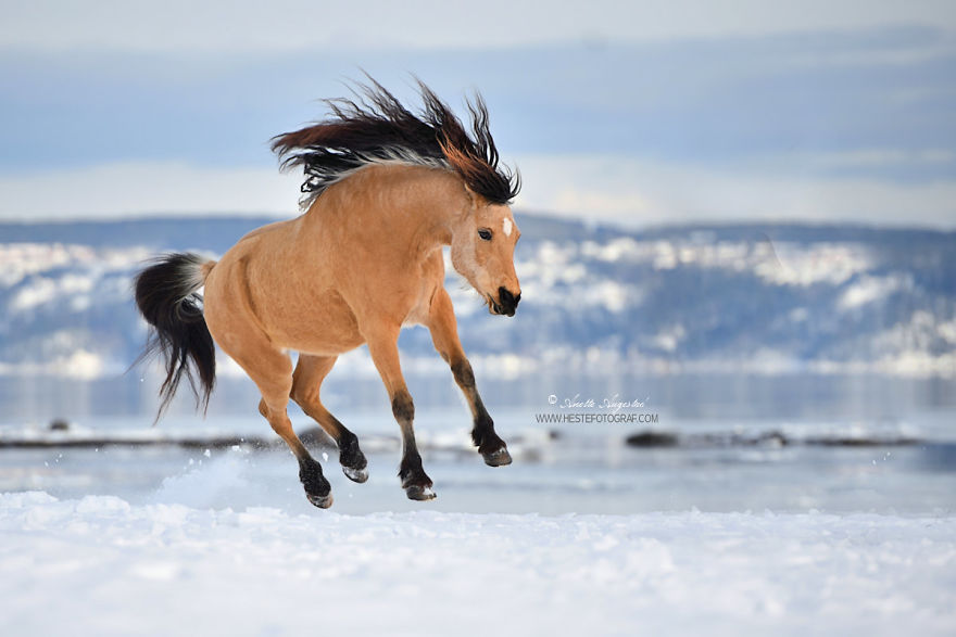 If Disney's Spirit: Stallion Of The Cimarron Moved To Norway