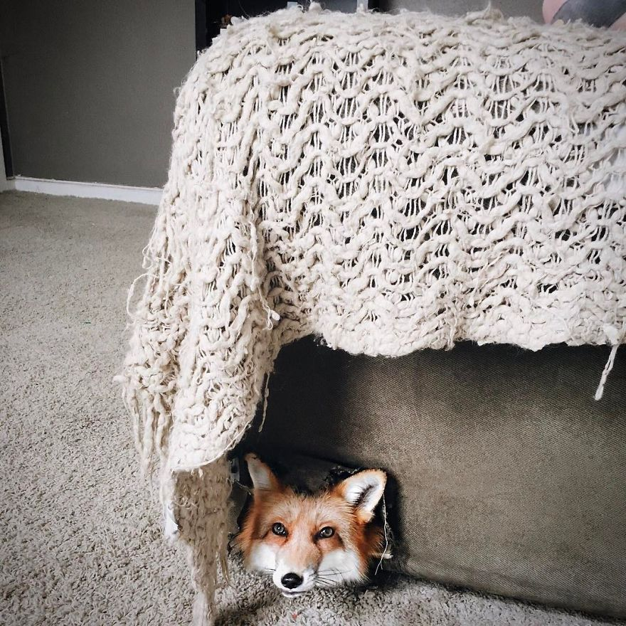 Here's What It's Like To Live With Juniper The World's Happiest Fox