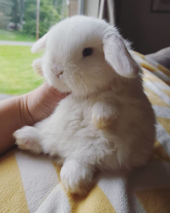 30 handfulls of cute baby bunnies that will melt your heart bored