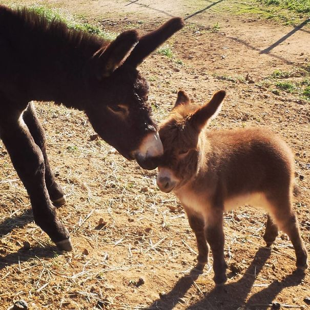 These 25 Cute Baby Donkeys Are Everything You Need To See