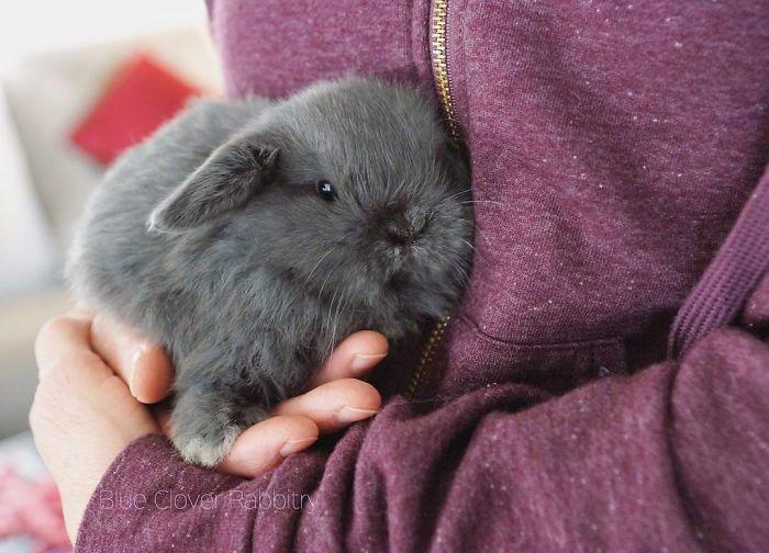 Baby-Rabbits-Palms-Blue-Clover-Rabbitry