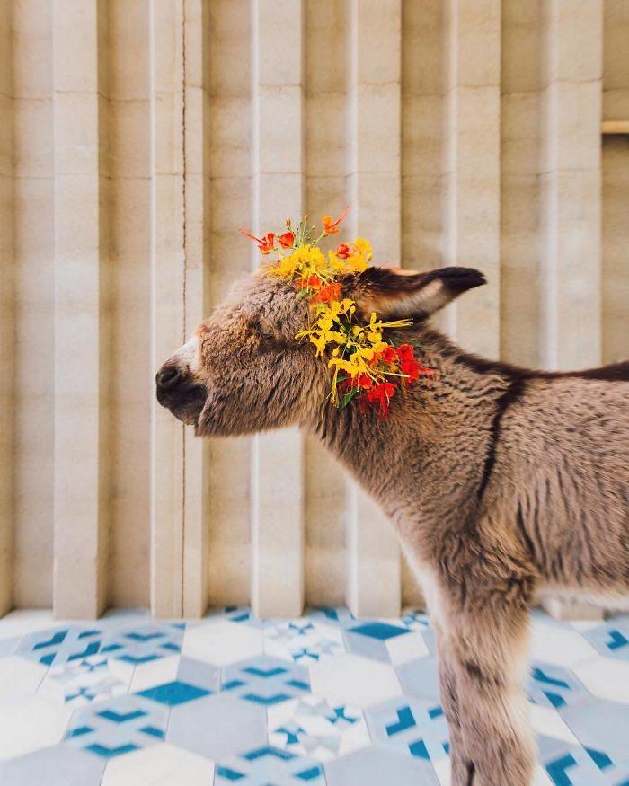 The Most Kissable Baby Donkey, Burrito