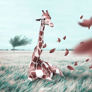Fantastical-Surreal-Manipulations-Julien-Tabet