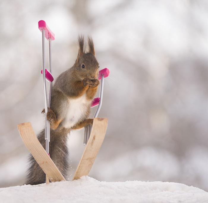 The Squirrel Paralympics