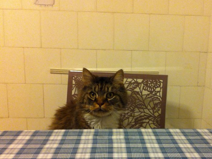 Where Is My Plate, Human?