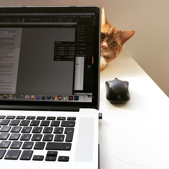 Meet Milo, My New Supervisor