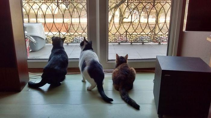 One Bird, 3 Cats