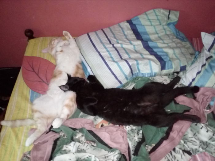 Sleeping Like A Boss On Our Bed, Day & Night!