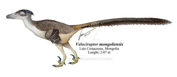 Velociraptor-Mongoliensis-5a9837ffc4bdc.jpg